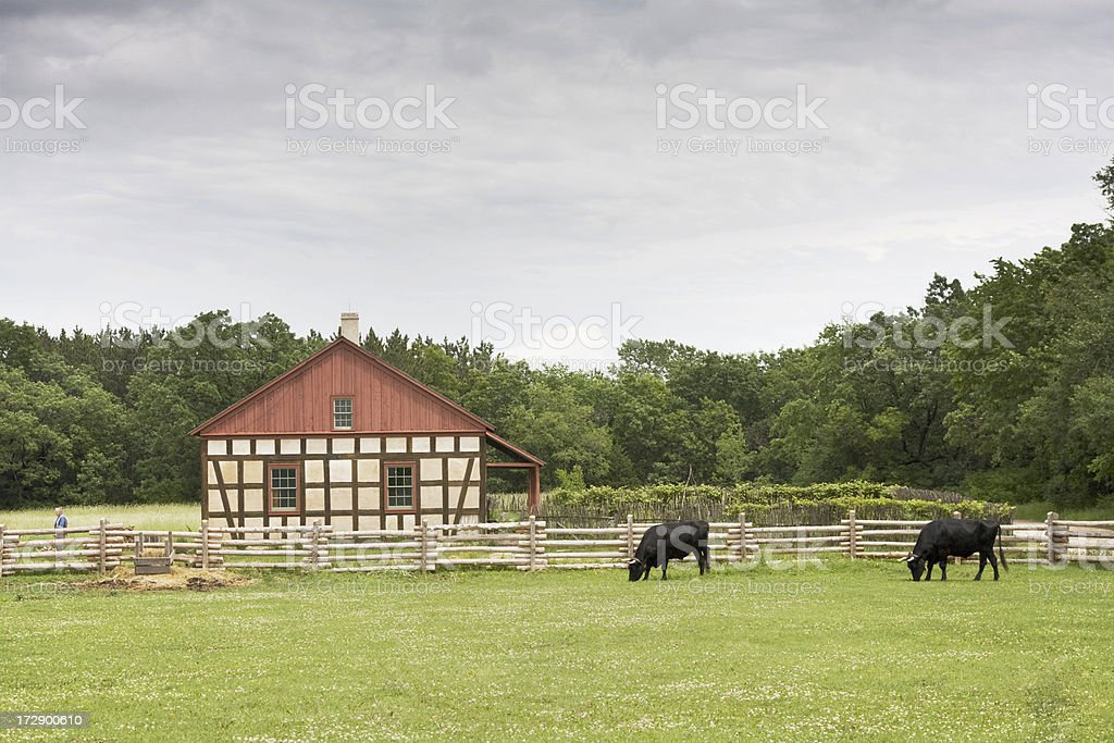 Old Farmhouse With Oxen royalty-free stock photo