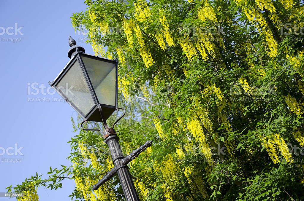 Old Fashioned Street Lamp in City of Chester royalty-free stock photo