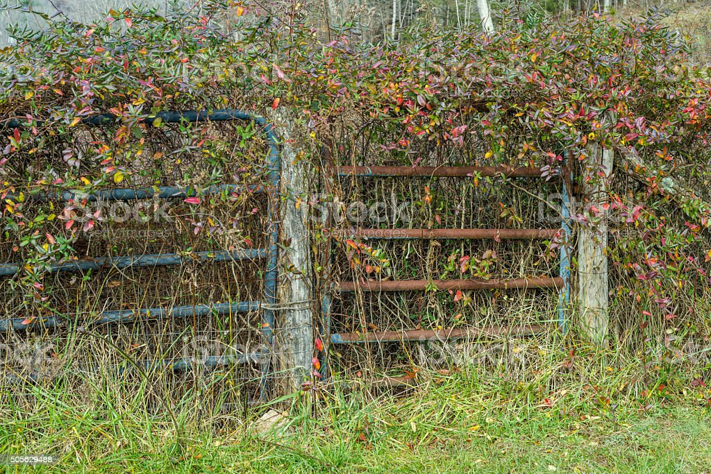 Old fence and gate in the country stock photo