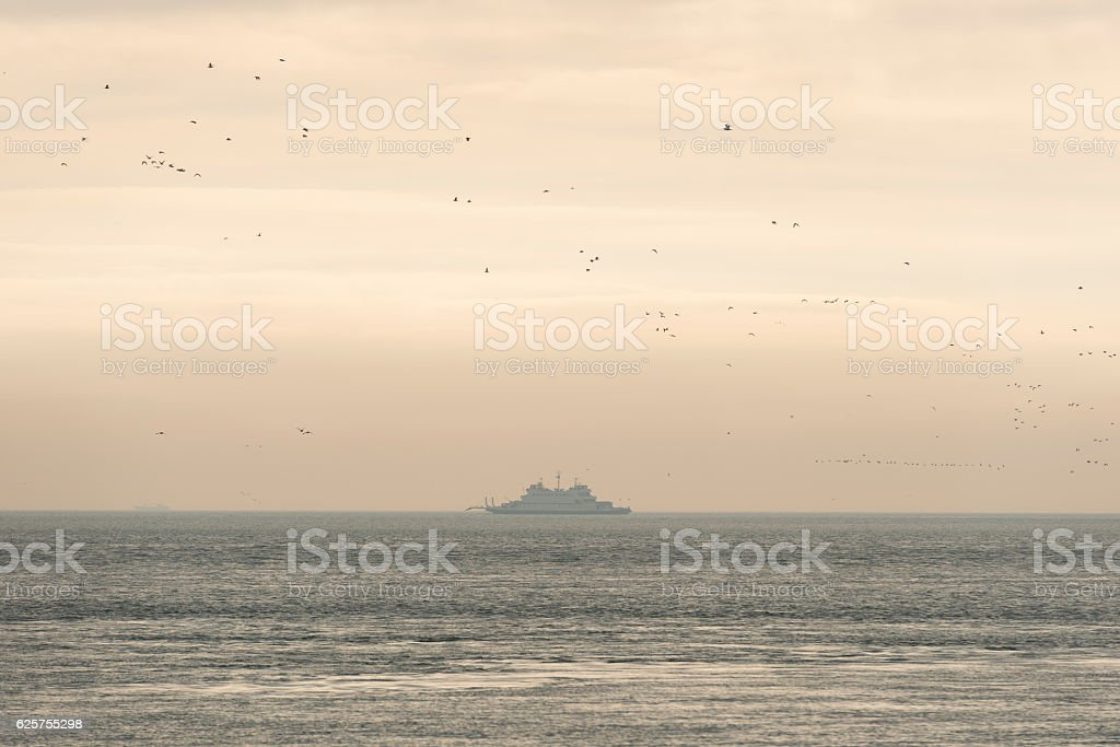 Old ferry on the Wadden Sea surrounded by birds. stock photo