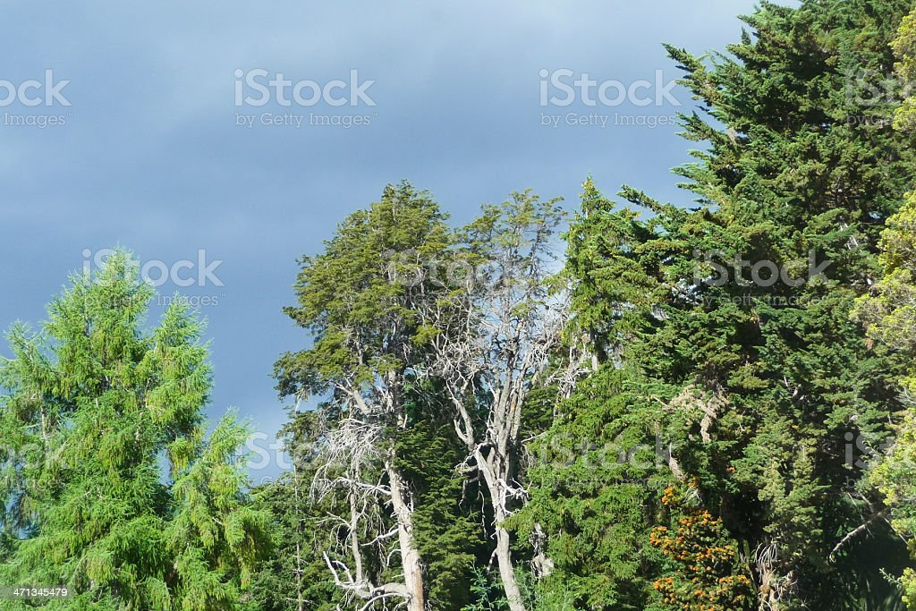 Old forest royalty-free stock photo