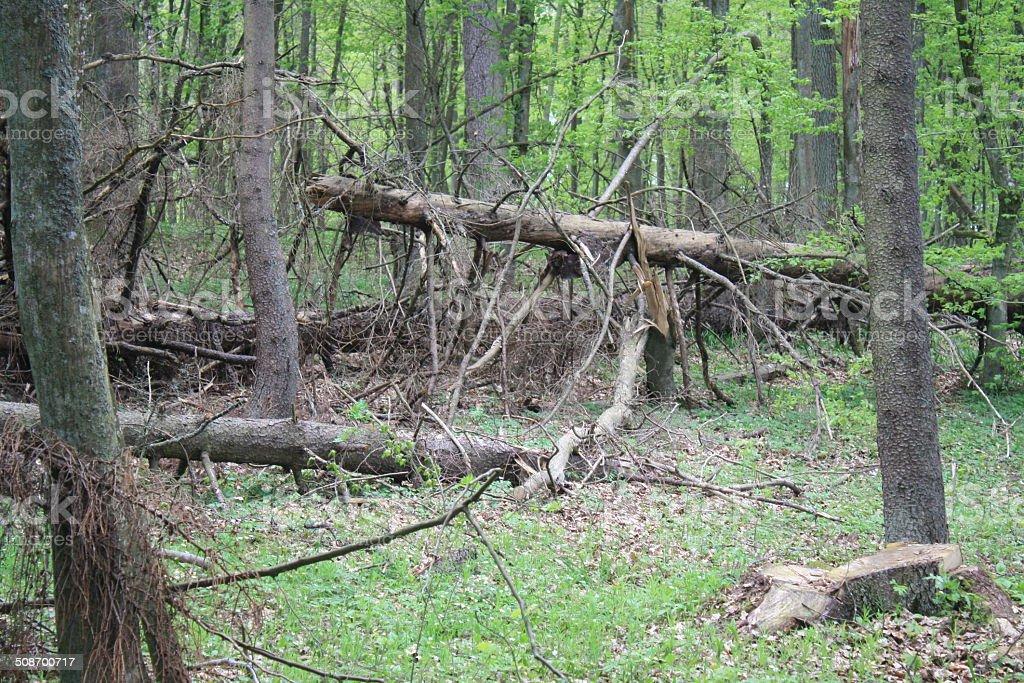 Alte forest Lizenzfreies stock-foto