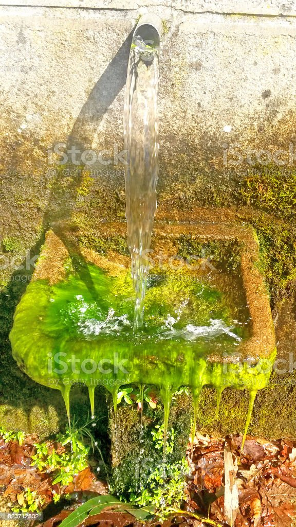 old fountain with alga stock photo