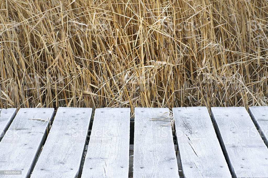 Old frozen jetty with reed in background royalty-free stock photo