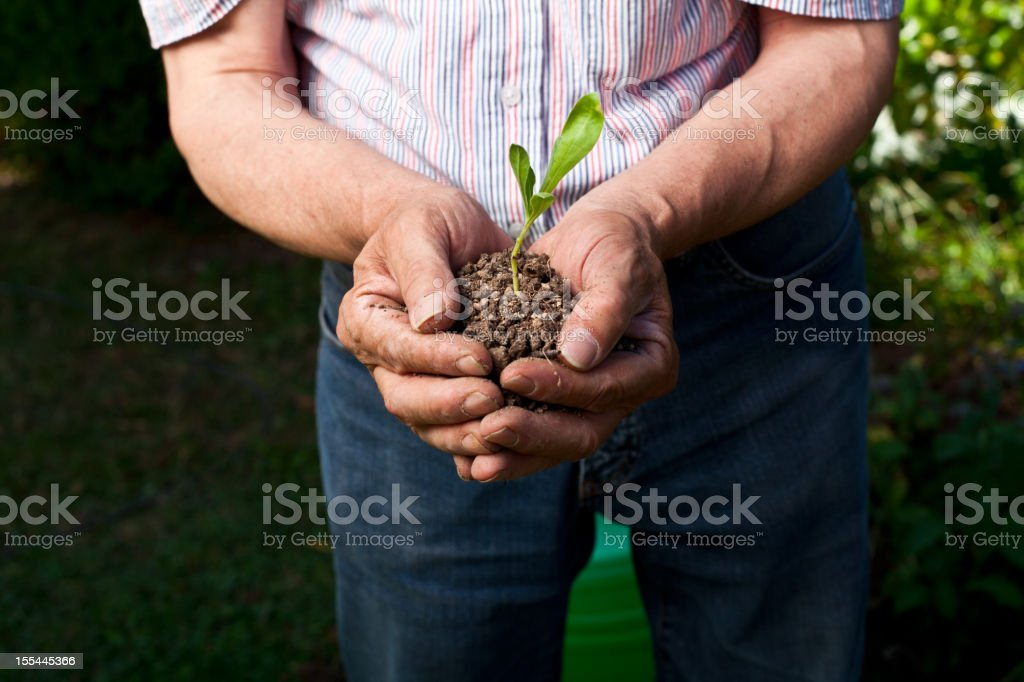 Old gardener holding soil and shoot royalty-free stock photo