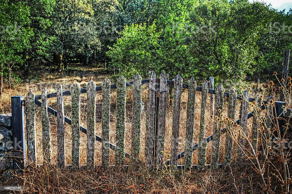 old gate in the forest stock photo
