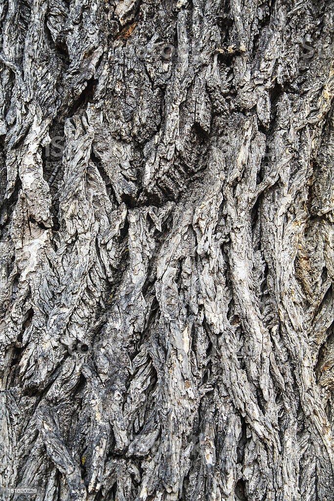 Old Gray Bark on Tree royalty-free stock photo