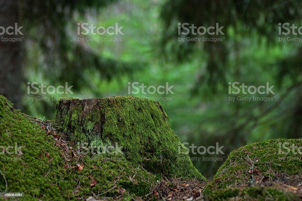 Old green stump stock photo