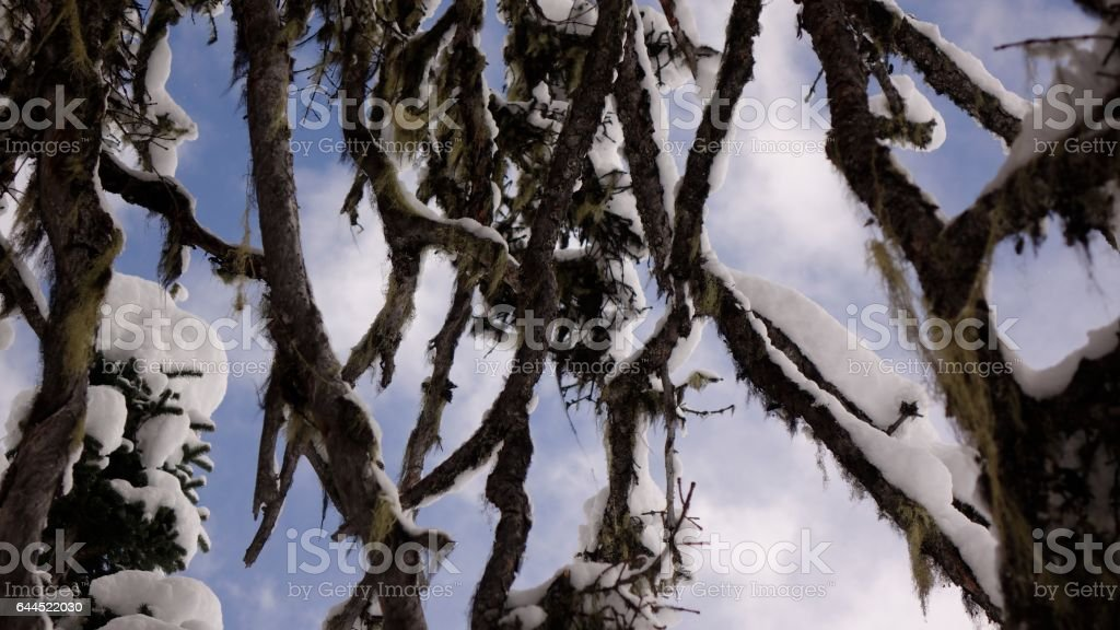 Old growth winter Branches stock photo