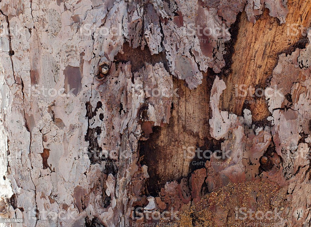 Old grunge textured wood background stock photo