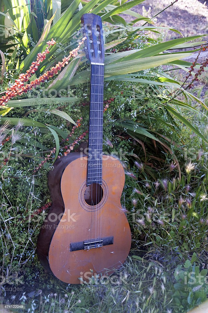 Old guitar in the bush stock photo