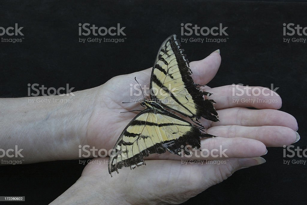 Old Hands Holding Battered Butterfly stock photo