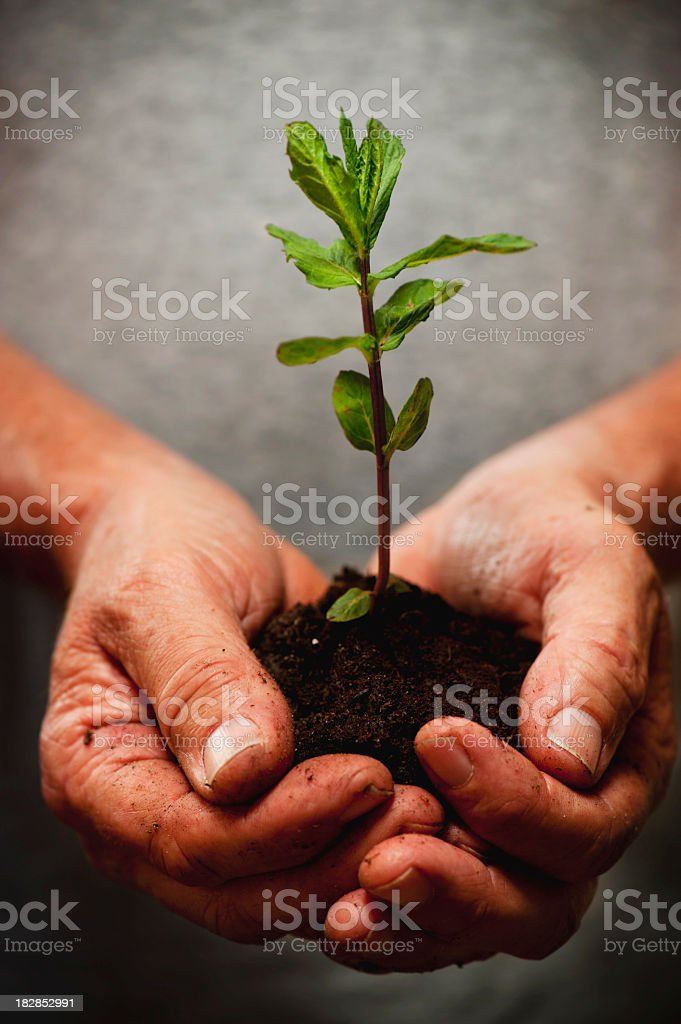 Old hands holding new life royalty-free stock photo