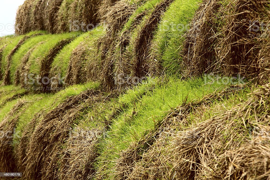 Old hay piles. royalty-free stock photo