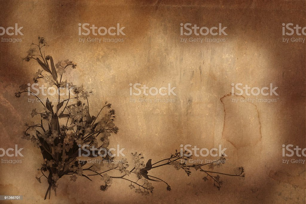 old herbarium background royalty-free stock photo