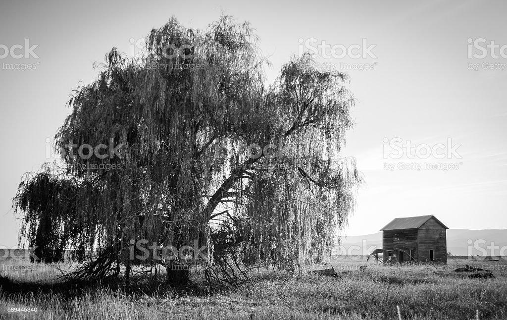 Old Holt Homestead in Bigfork Montana stock photo