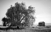 Old Holt Homestead in Bigfork Montana