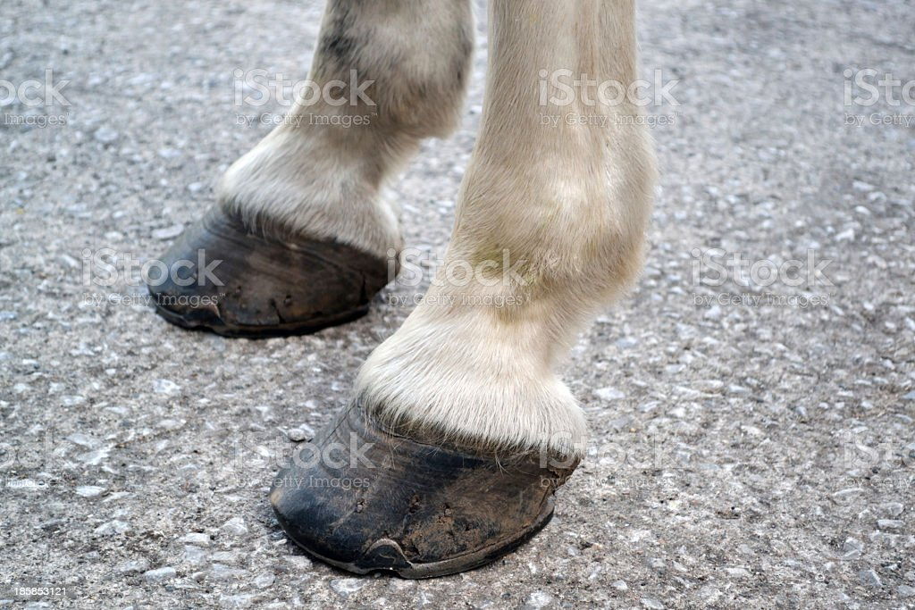 Old Horse Hooves stock photo