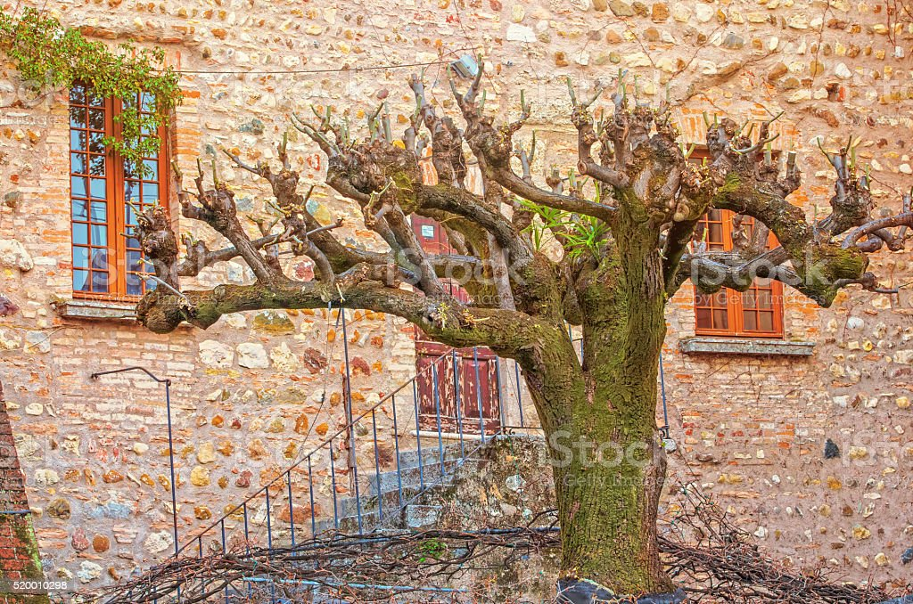 Old house and tree royalty-free stock photo