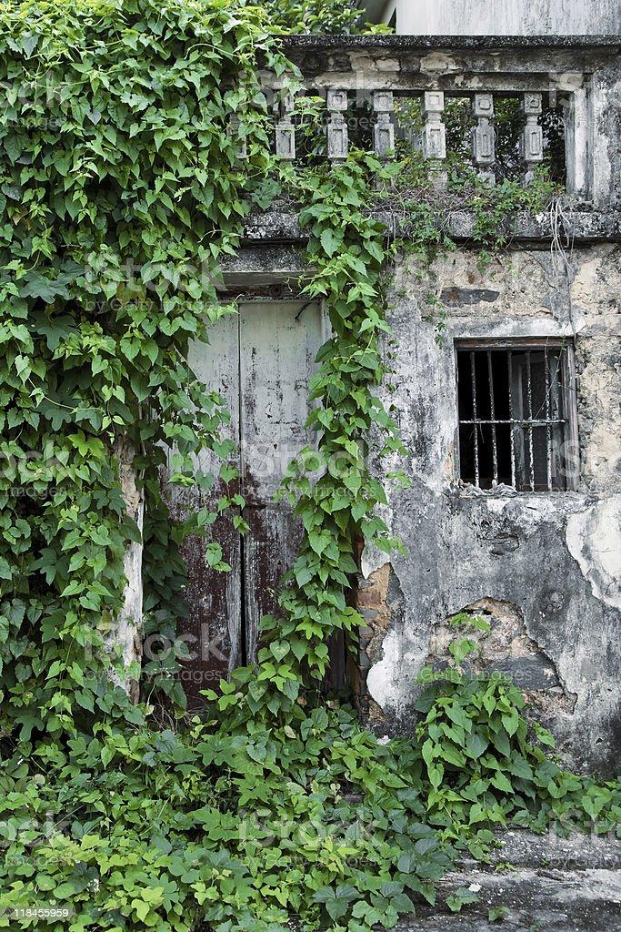 Antigua casa cubierta con hojas de la puerta frontal foto de stock libre de derechos