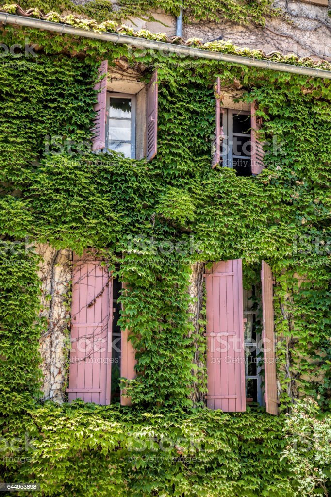 Old house with green leaves in Provence, France stock photo
