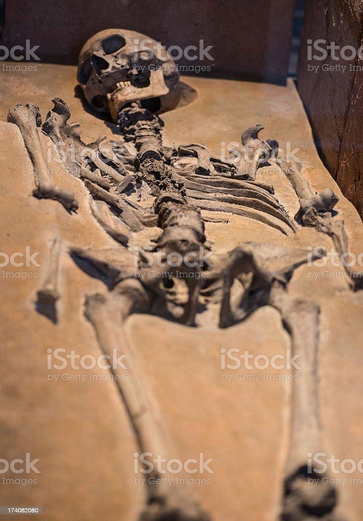 old human skeleton stock photo