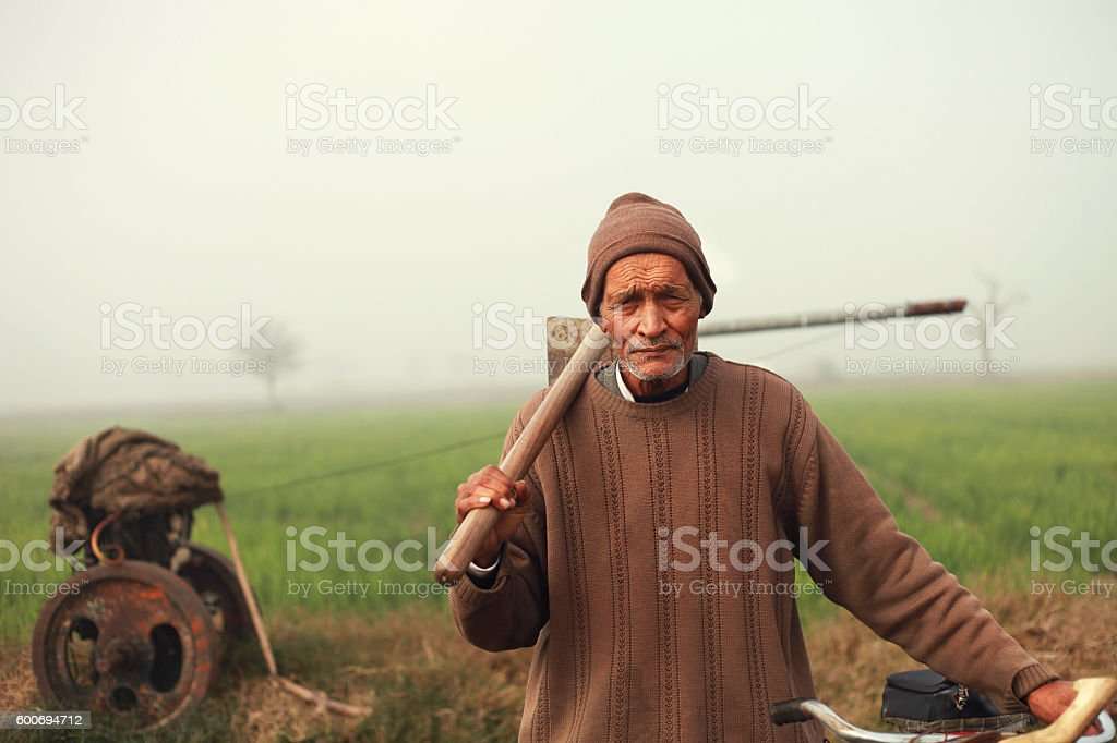 Old Indian farmer standing in green field stock photo