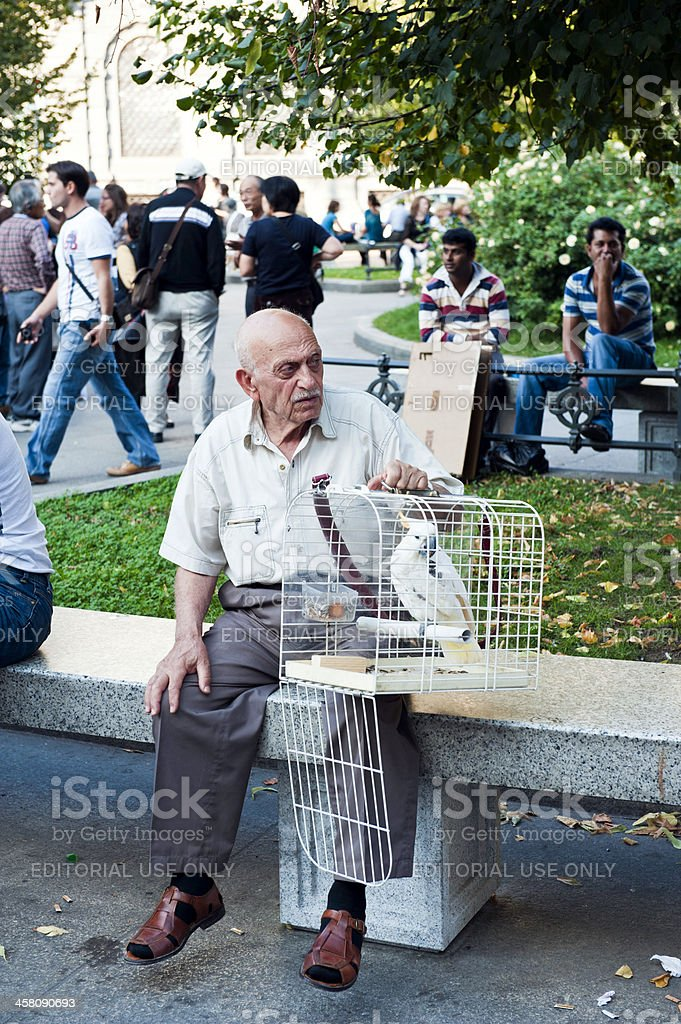 Old Italian man with Parrot stock photo