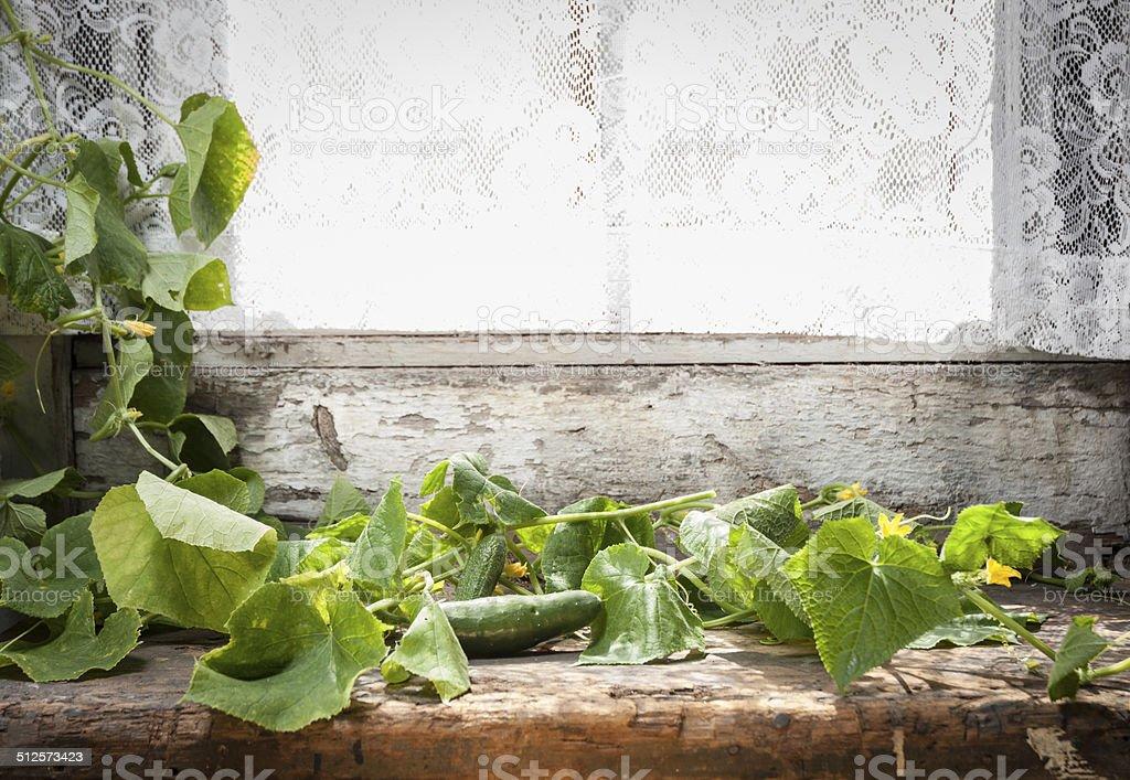 Old kitchen window with cucumber vine stock photo