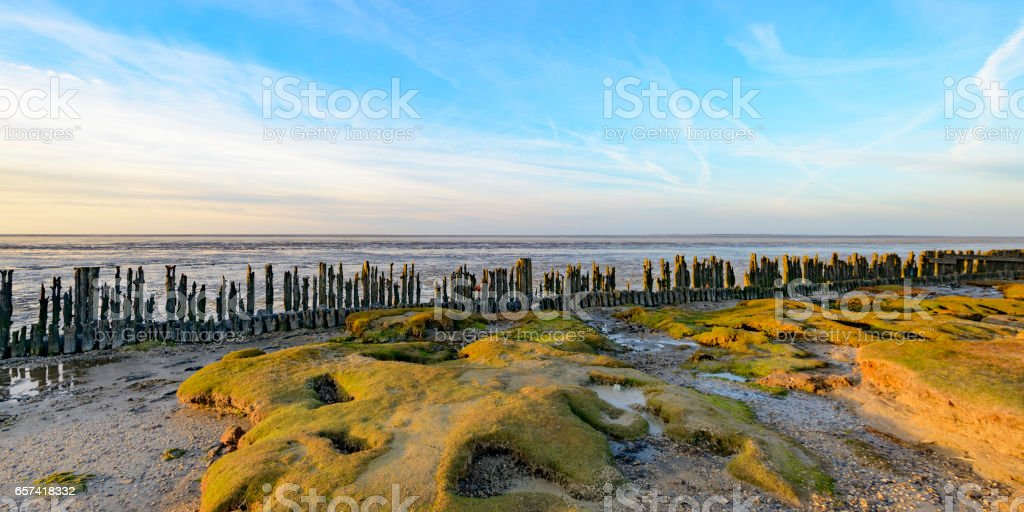 Old land reclamation poles on the tidal flats during sunset stock photo