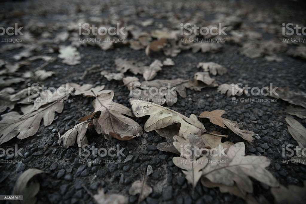 Old Leaves royalty-free stock photo