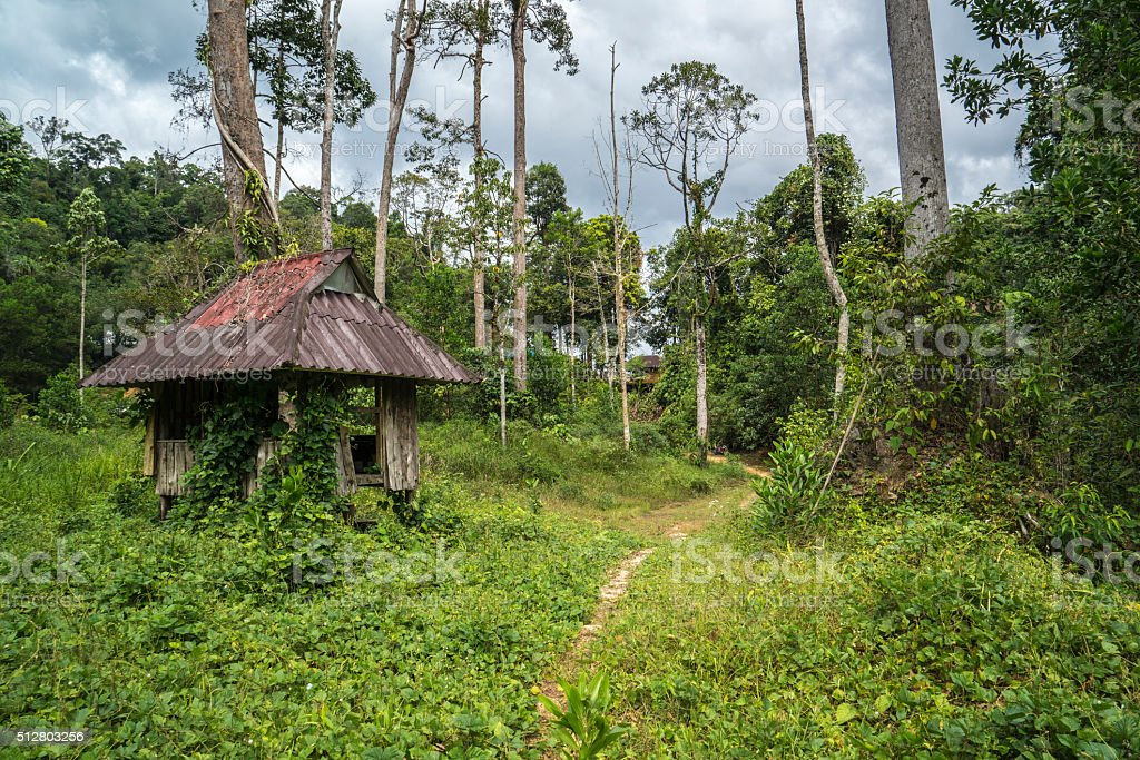 Old lodge in jungle stock photo