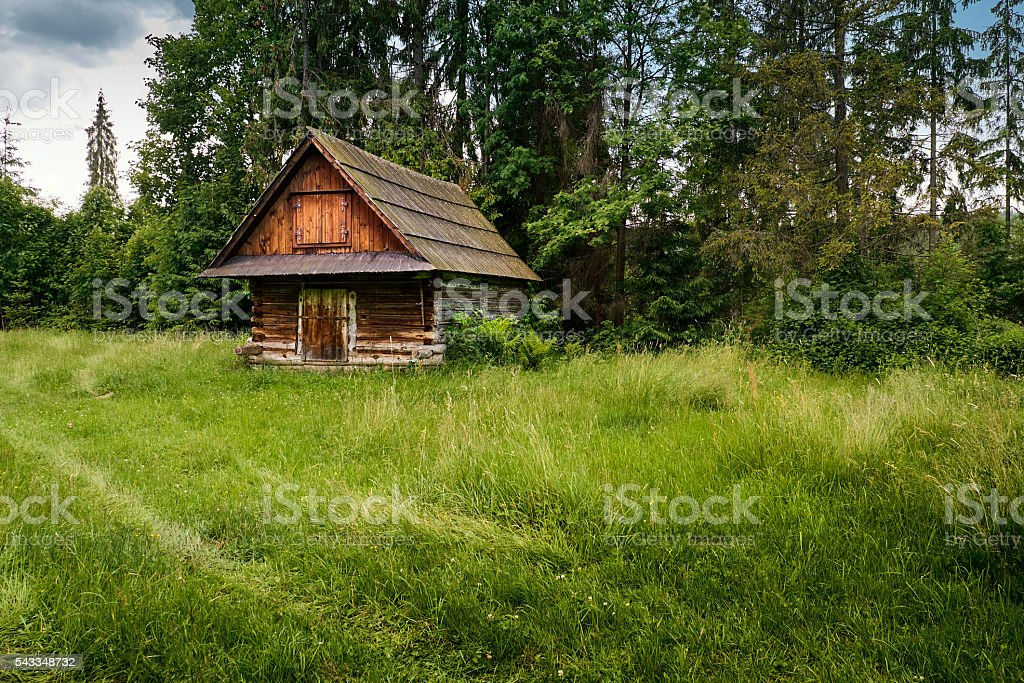 Old log cabin in the forest stock photo