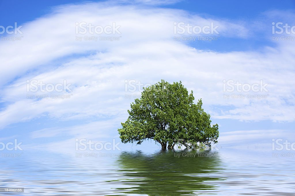 old lone oak tree royalty-free stock photo