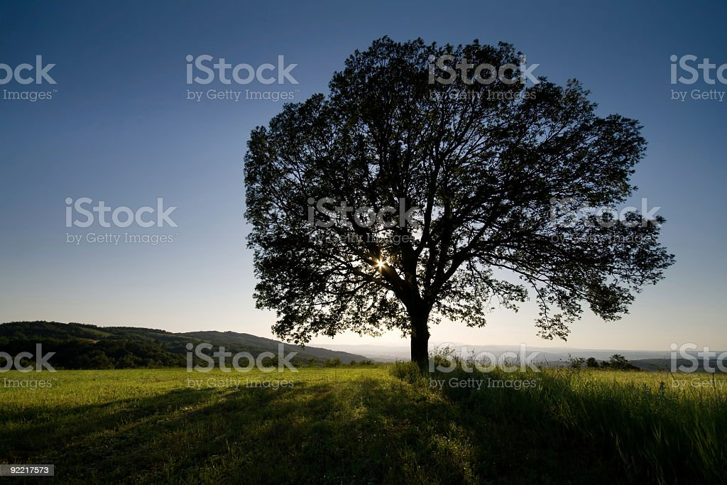 Old lonely oak tree and sunset royalty-free stock photo