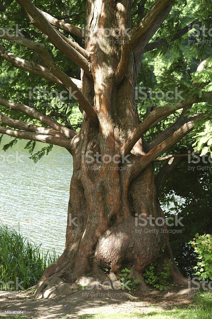Old Lonely Tree royalty-free stock photo