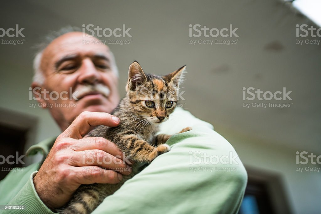 Old man and a cat stock photo