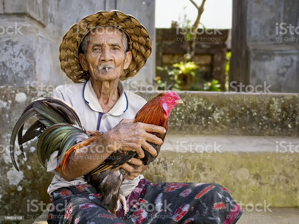 Old Man and his Prized Fighting Rooster stock photo