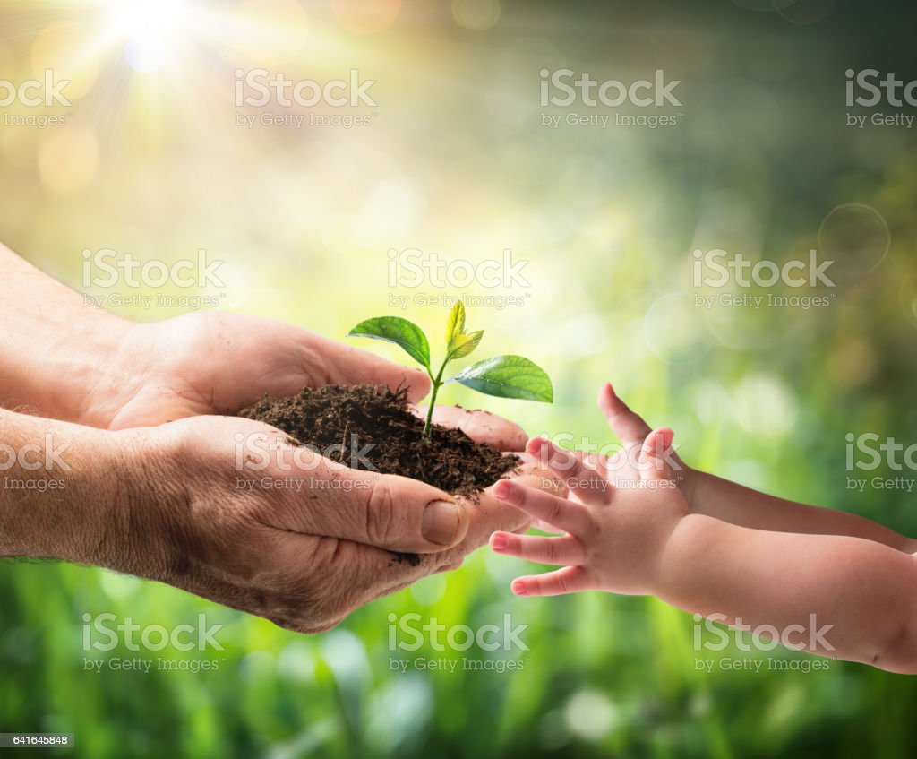Old Man Giving Young Plant To A Child stock photo