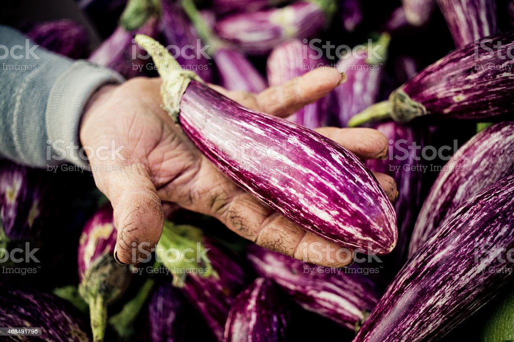 Old man hand holding a purple aubergine stock photo