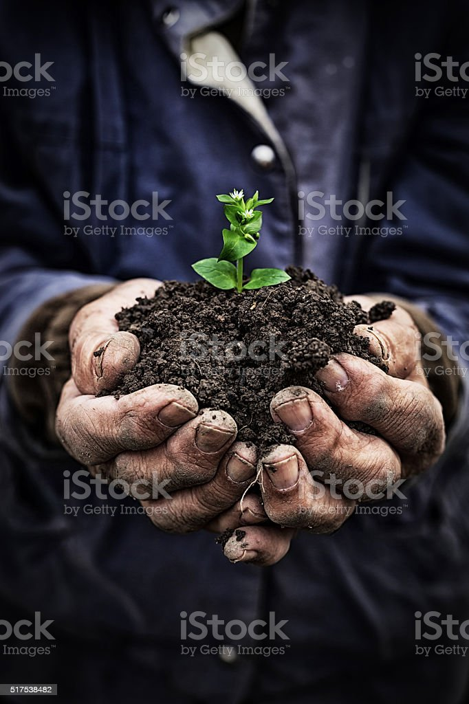 Old man holding new growth-hands close up stock photo