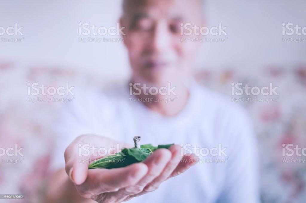 Old man holding silkworm stock photo