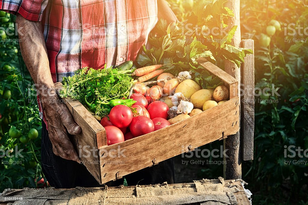 Old man holding wooden crate filled with fresh vegetables stock photo