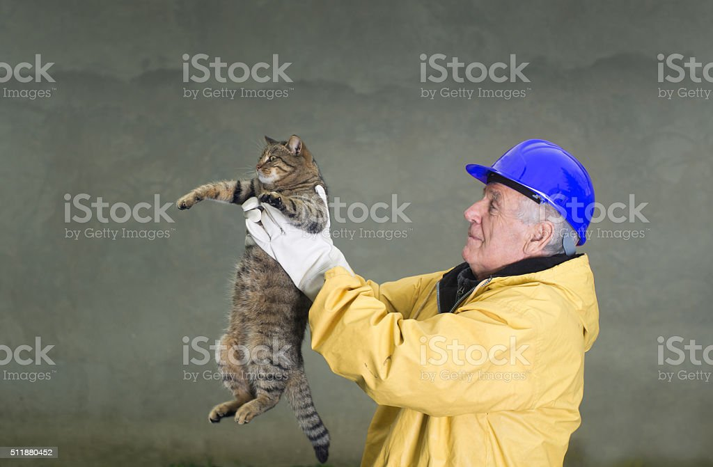 Old man rescuing cat stock photo
