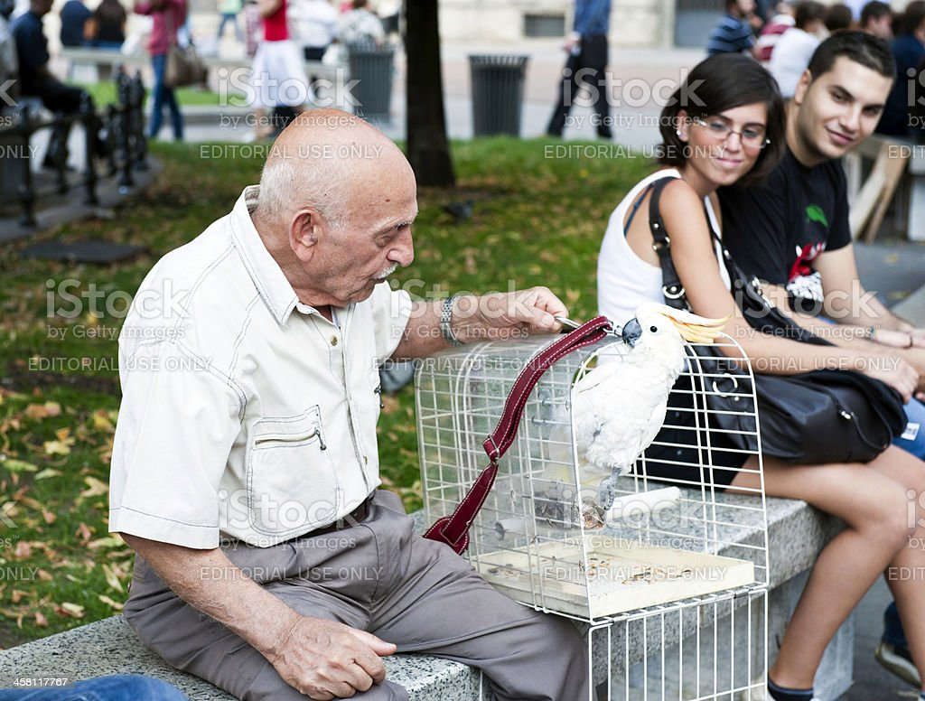 Old man with Parrot in Milan stock photo