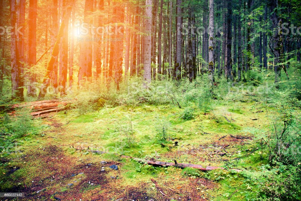 Old natural forest background stock photo