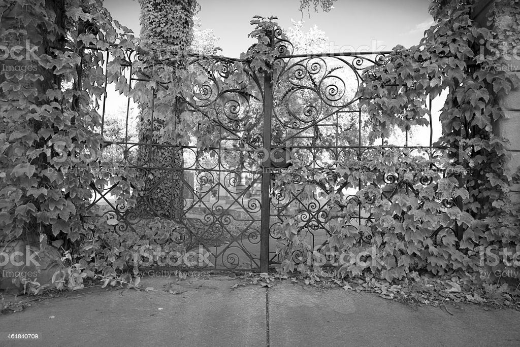 Old overgrown cemetery gate stock photo
