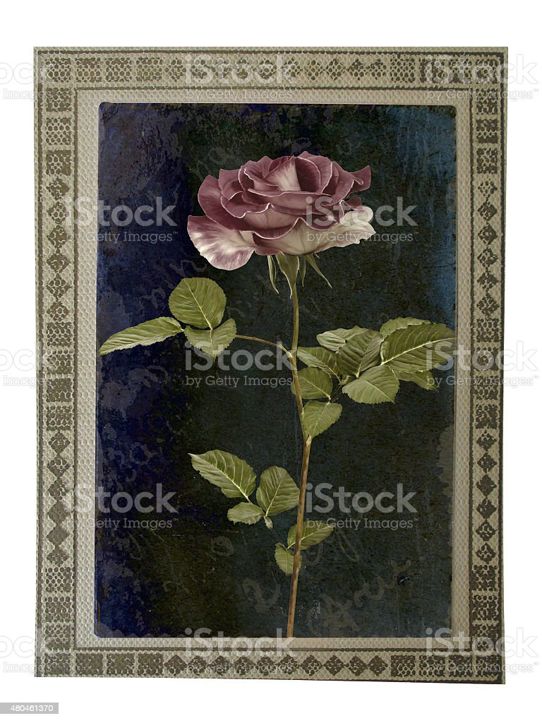 Old paper vintage card with beautiful pink rose stock photo