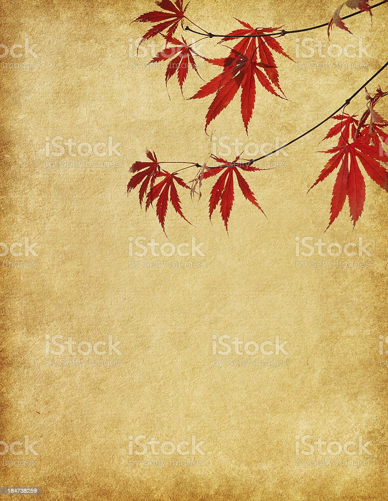 Old paper with branch of  autumn leaves. royalty-free stock photo