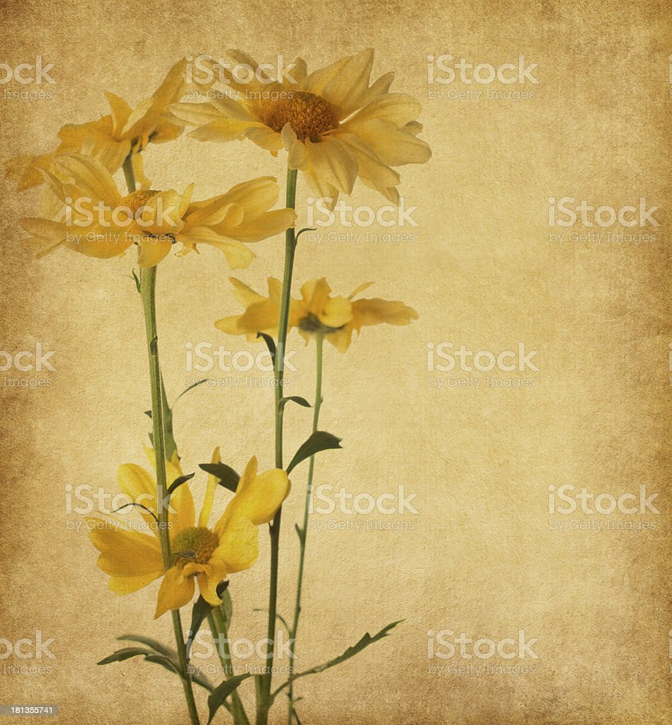 old paper with yellow flowers royalty-free stock photo